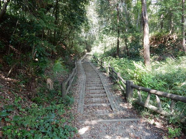 Photos: 武蔵野の路