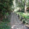 武蔵野の路