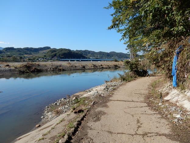 相模川沿い