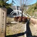 Photos: 宮ヶ瀬ダムと新石小屋橋