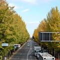 Photos: 甲州街道