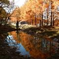 Photos: わんぱく池