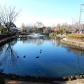Photos: 狭山池公園