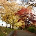 Photos: 根川緑道