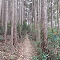 Photos: 山道
