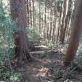 Photos: 勝峰尾根