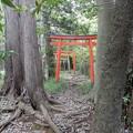 Photos: 紅葉稲荷社