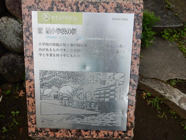 62 砧小学校の桜