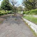 Photos: 尾根緑道