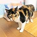 Photos: 2004103なんちゃん2