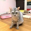 Photos: 2007103さばぞう1