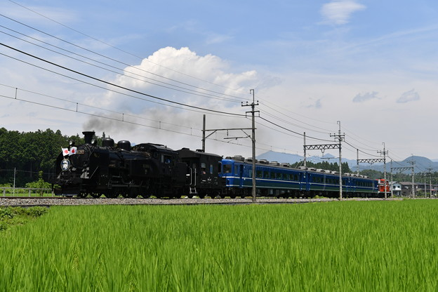 Photos: SL大樹 2号 (C11207)