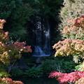 Photos: 紅葉と滝