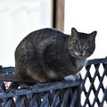 Photos: よく来る野良猫