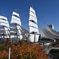 Photos: 日本丸の総帆展帆