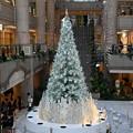Photos: ランドマークのクリスマスツリー