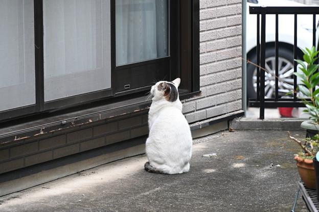 配給待ちの野良猫