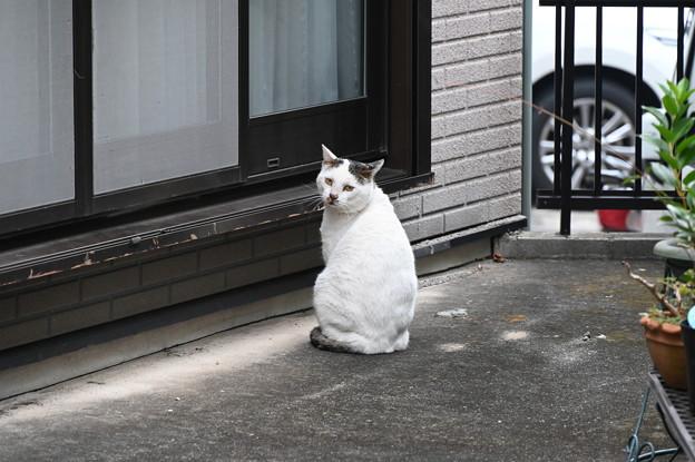 こちらに気付いた野良猫