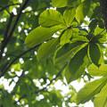 写真: 葉っぱ6