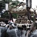 江戸の華@三社祭