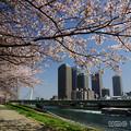 写真: 隅田川ウォーク