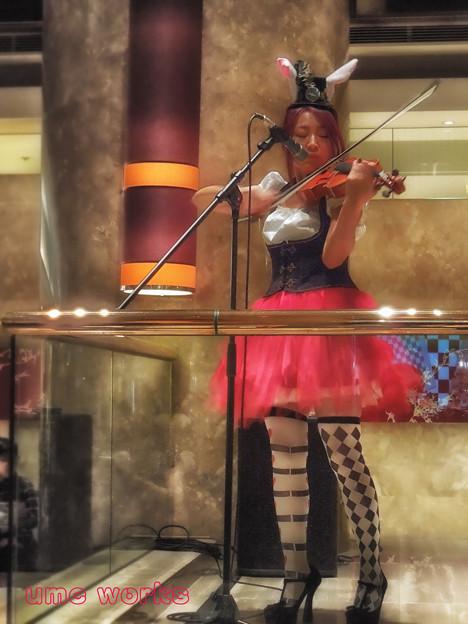 Violinist Rabbit in Wonderland