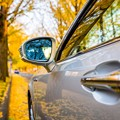 Photos: 黄色の並木道
