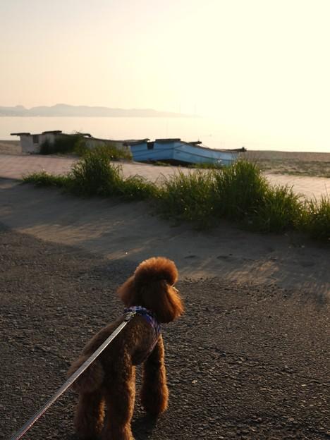 三浦海岸で朝のお散歩