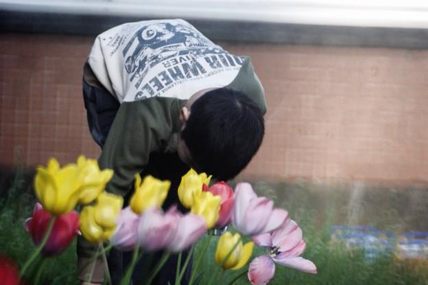 Photos: 花壇の手入れ