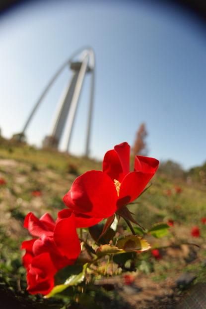 Photos: 138タワー