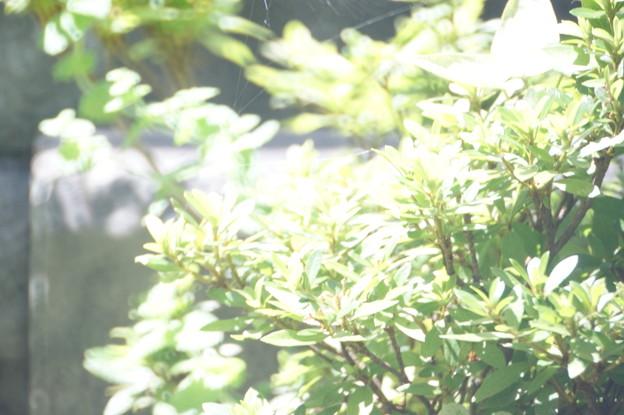 写真: 夏の日差し