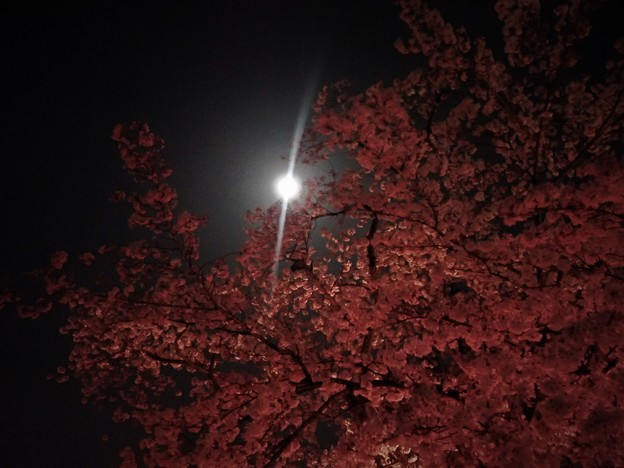 Photos: 花見・月見