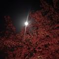 写真: 花見・月見