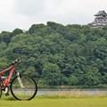 写真: 対岸から犬山城を望む