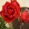 写真: 老いらくの恋(花姿)バラ