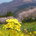 Photos: 由布の春