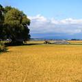 田園風景07