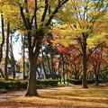公園の紅葉01