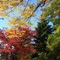 Photos: 公園の紅葉03