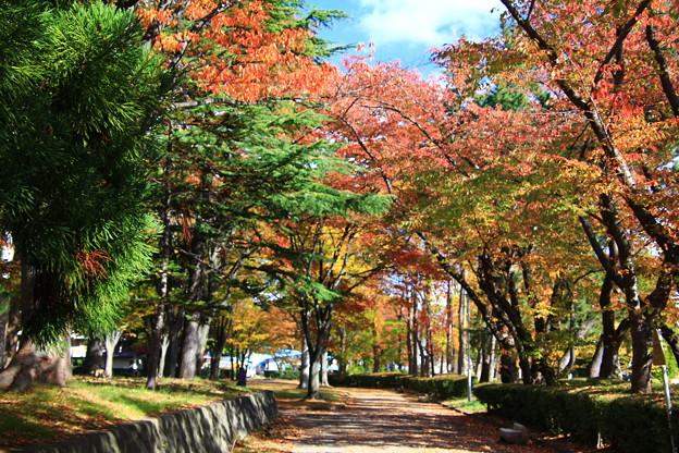 公園の紅葉05