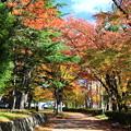 Photos: 公園の紅葉05