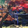 庭園の紅葉06