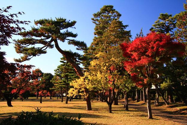庭園の紅葉08