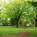 新緑の候01