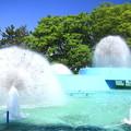 噴水と新緑01