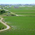 Photos: 鳶が見た水田