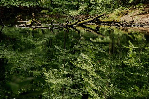 Photos: 蔦沼にて1