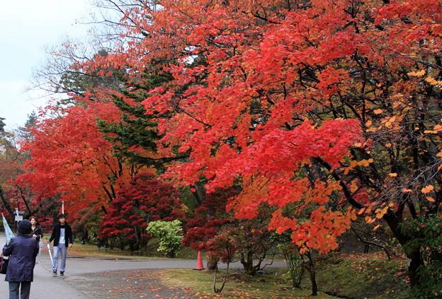 紅葉・弘前公園1