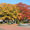 Photos: 紅葉・平和公園7