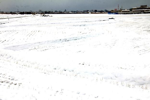 雪の原っぱ4